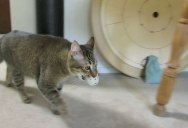 Guy Builds Machine That Trains His Indoor Cat to Hunt For Its Food
