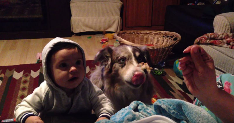 Mom Offers Son a Treat If He Can Say 'Mama', Hungry Dog Says It Instead