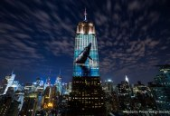 Artists Project Endangered Species on the Iconic Empire State Building