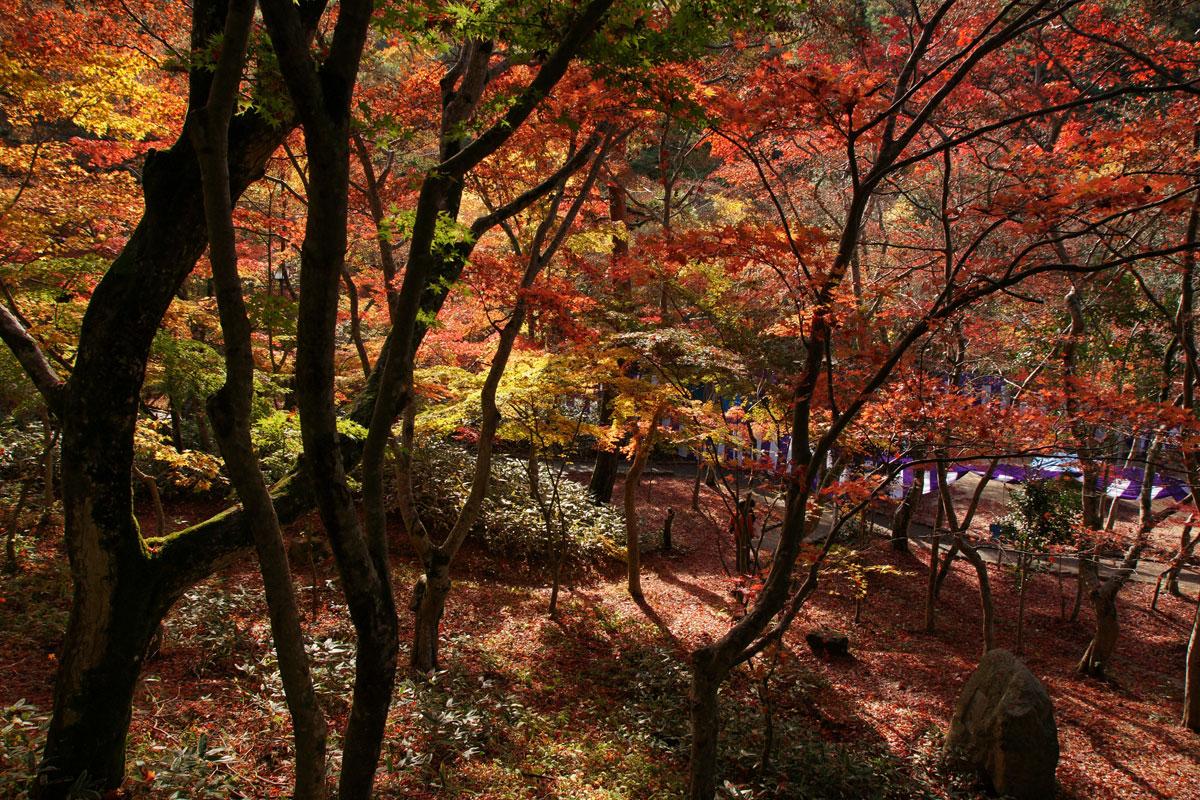 autumn-in-kobe-japan-Zuihoji_park