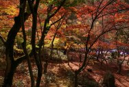 Picture of the Day: Autumn in Kobe, Japan