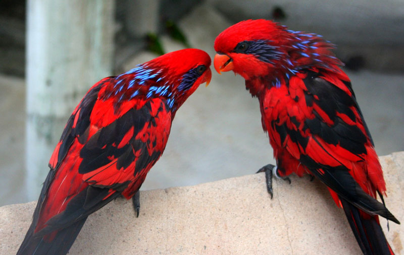 blue streaked lories The Top 100 Pictures of the Day for 2015