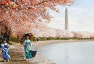 Picture of the Day: Cherry Blossoms, Washington DC, 1925