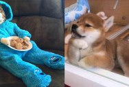 The Shirk Report – Volume 339