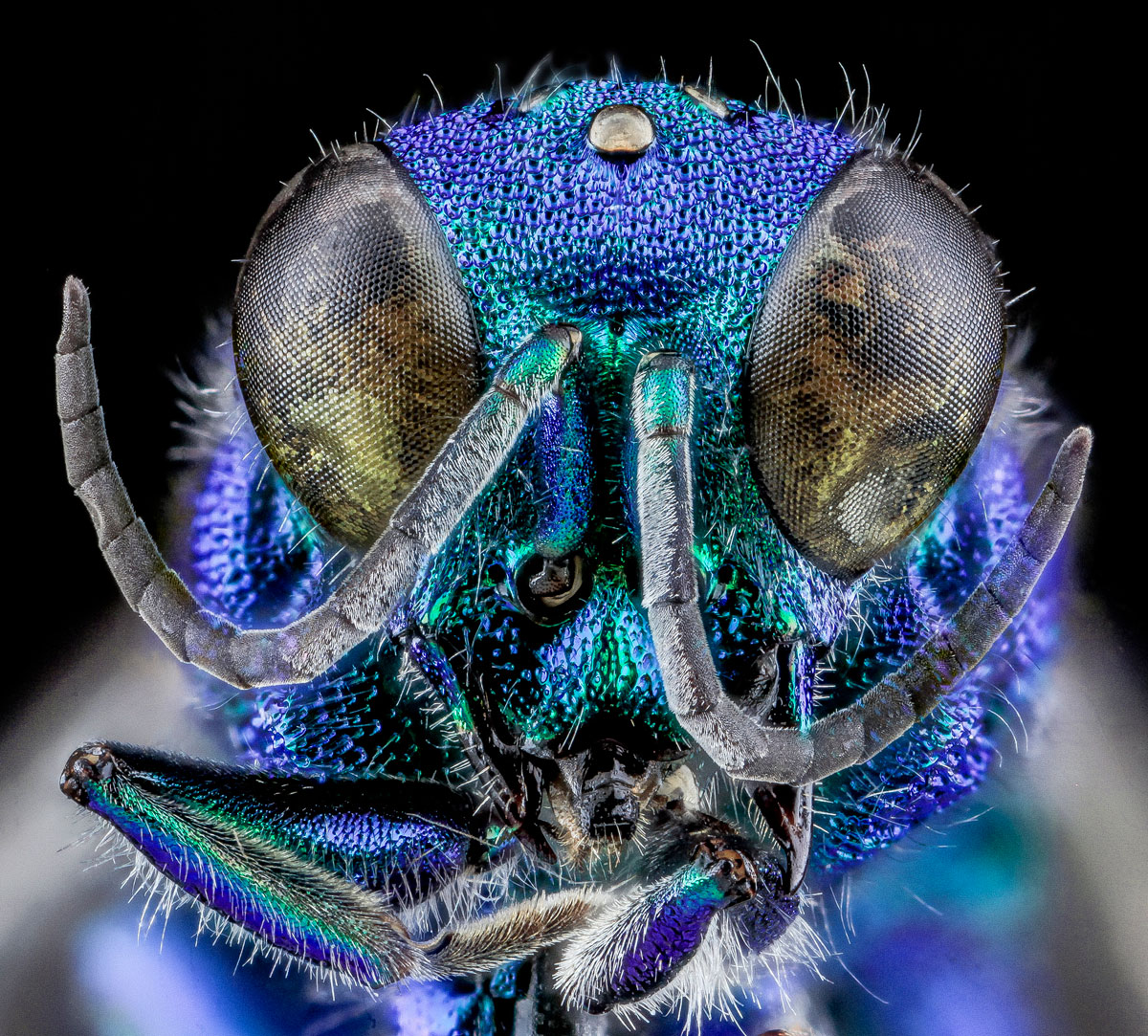 Close-Ups of Insect Eyes by usgs biml (1)