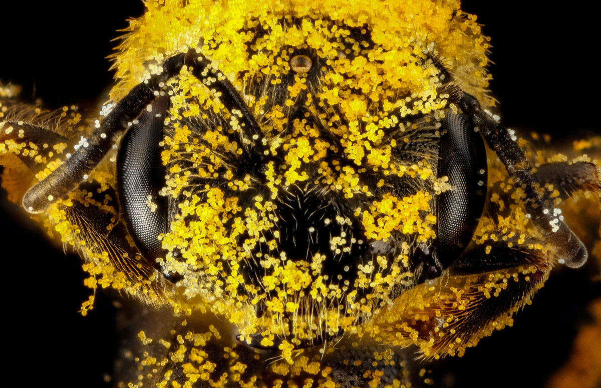 Close-Ups of Insect Eyes by usgs biml (12)