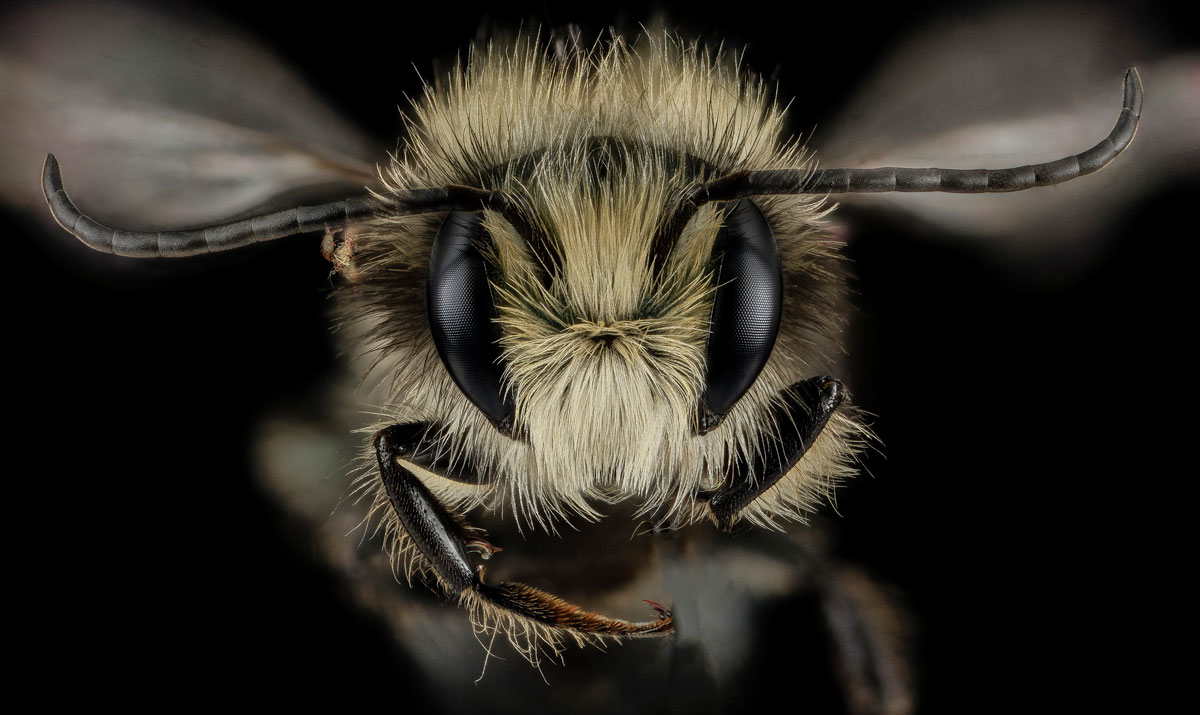 Close-Ups of Insect Eyes by usgs biml (16)