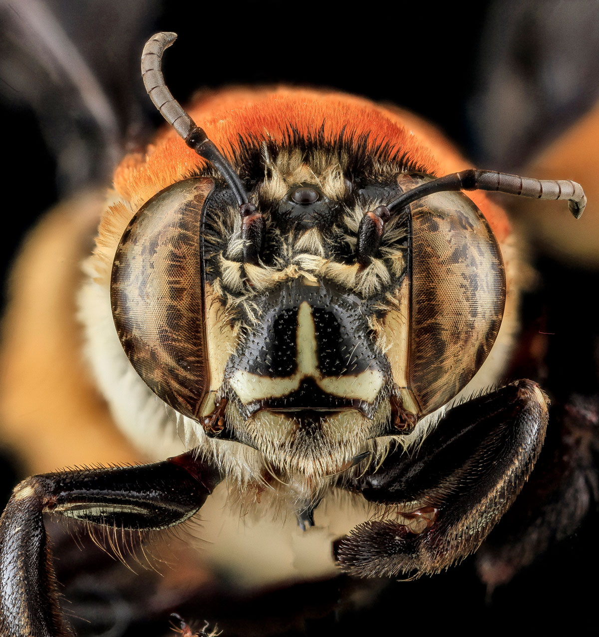 Close-Ups of Insect Eyes by usgs biml (18)