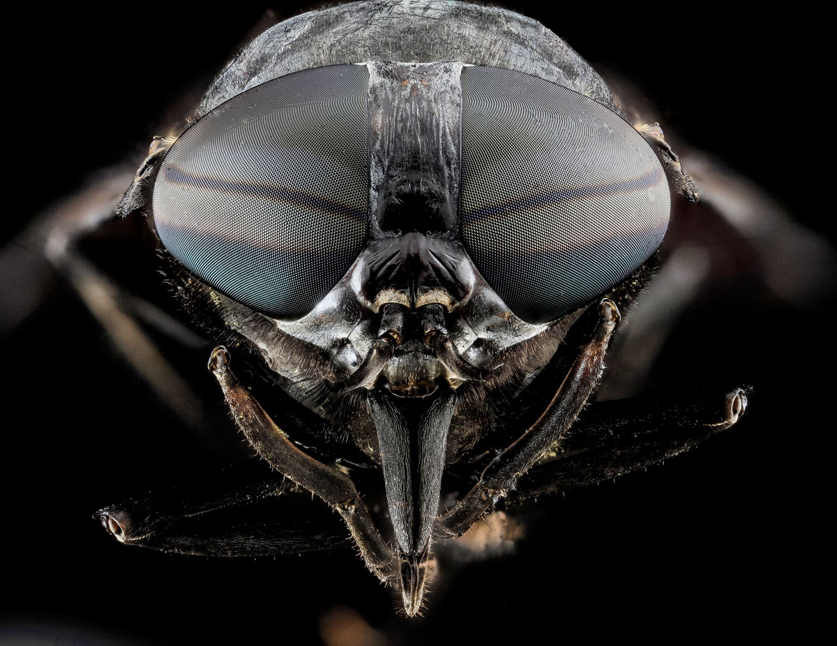 Close-Ups of Insect Eyes by usgs biml (2)