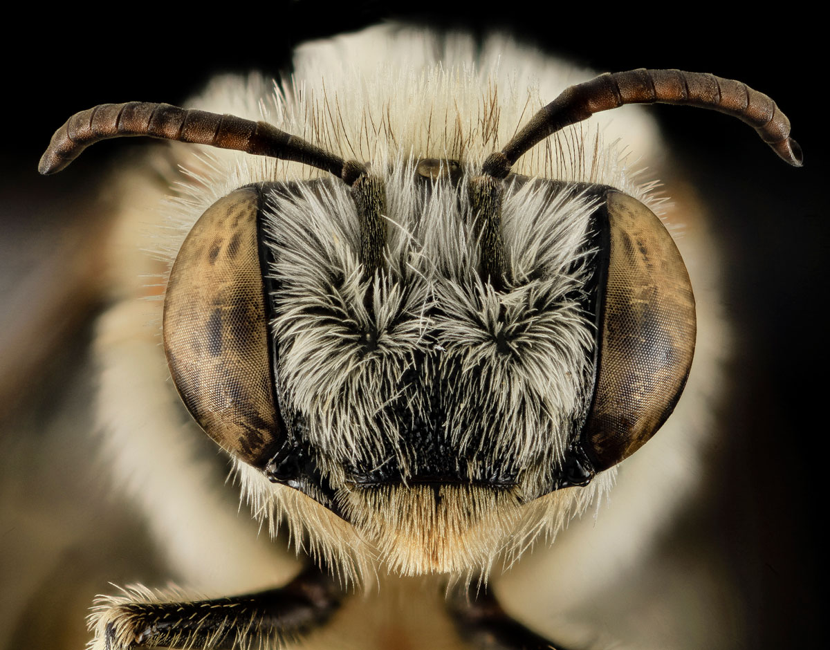Close-Ups of Insect Eyes by usgs biml (23)
