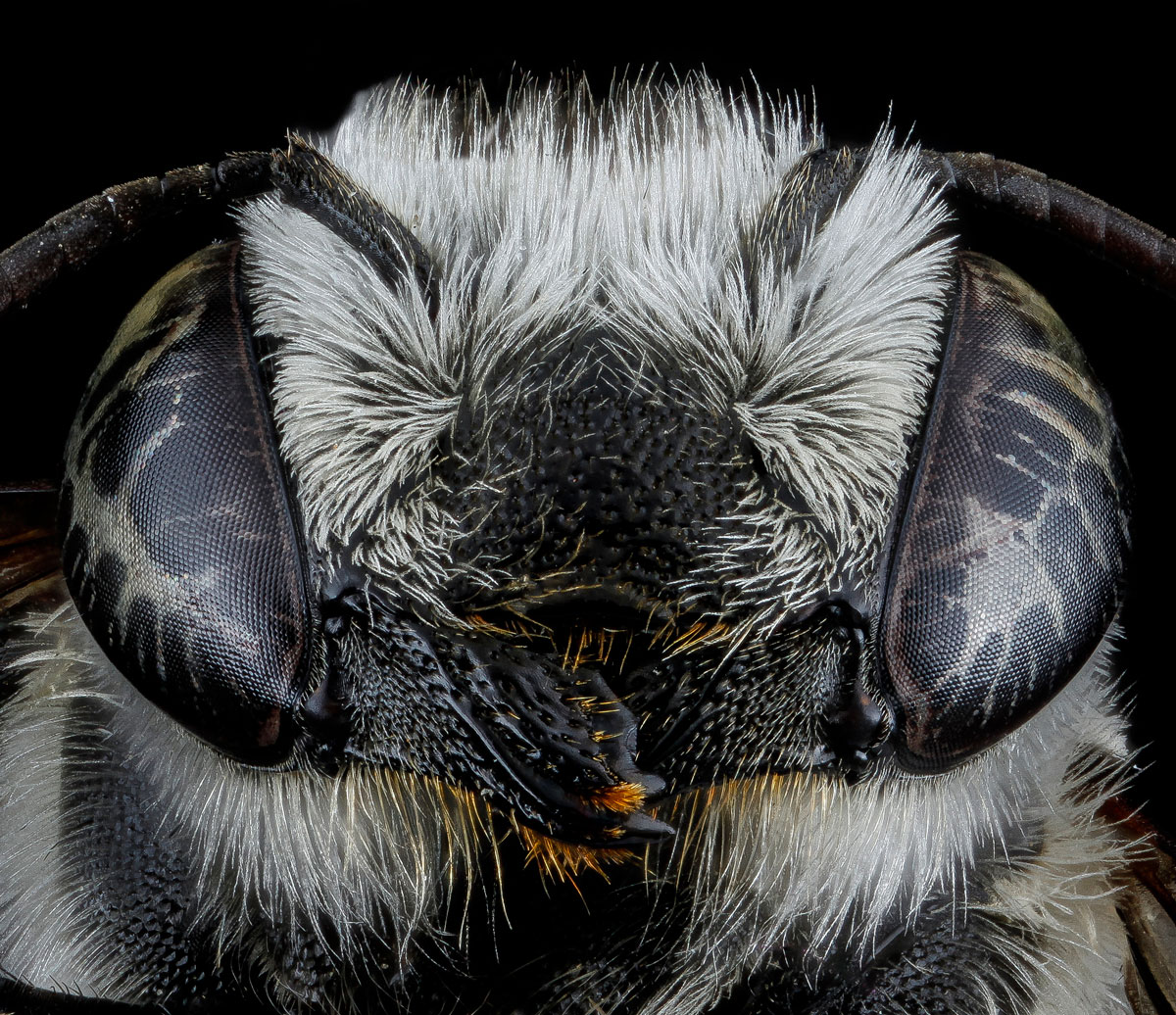 Close-Ups of Insect Eyes by usgs biml (25)