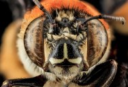 25 of the Best Close-Ups of Insect Eyes You Will See