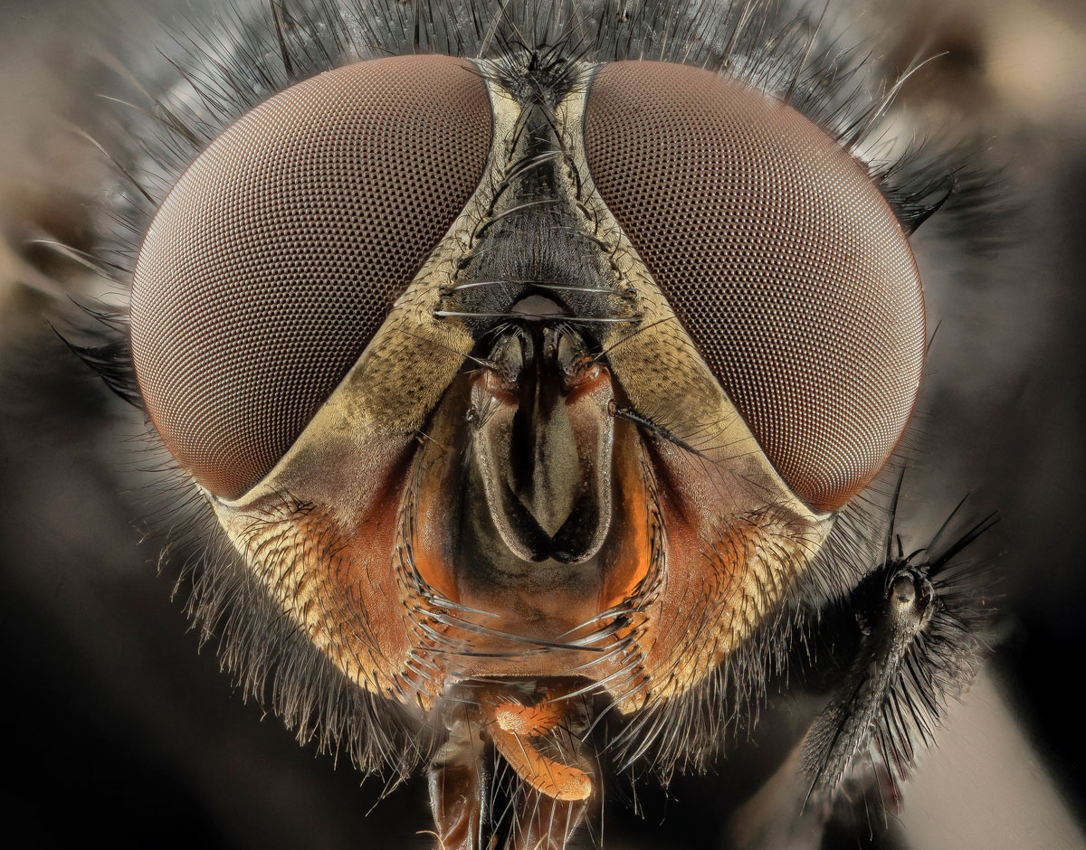 Close-Ups of Insect Eyes by usgs biml (9)