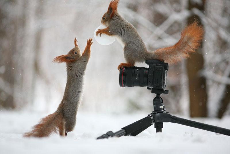 squirrel snowball fight photos by vadim trunov (1)