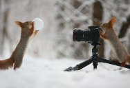 These Photos of Squirrels Playing Will Totally Make Your Day