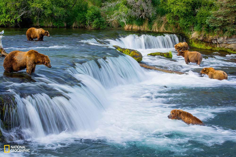 A little bit of Bear's Paradise