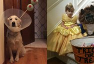 15 Awesome Halloween Costumes from this Past Weekend