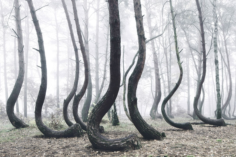 crooked forest in poland by Kilian Schoenberger (4)