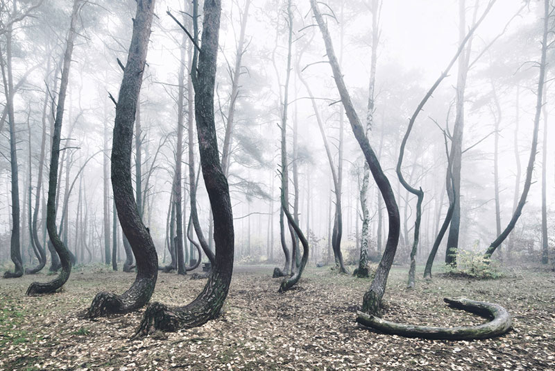 crooked forest in poland by Kilian Schoenberger (5)