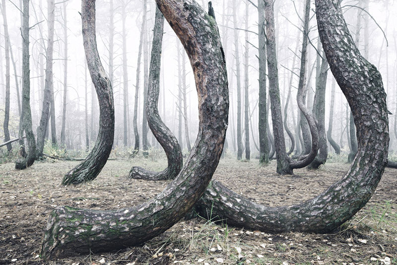 crooked forest in poland by Kilian Schoenberger (7)