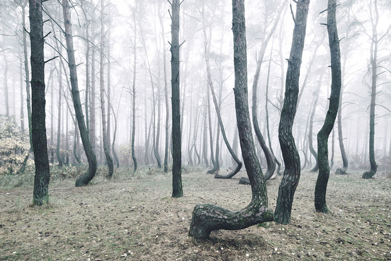 crooked forest in poland by Kilian Schoenberger (9)