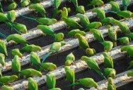 India's 'Birdman' Spends 40% of His Income to Feed 4,000 Parakeets Daily