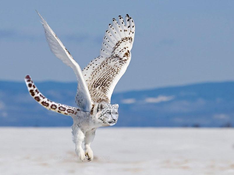 photoshopped animal hybrids (1)