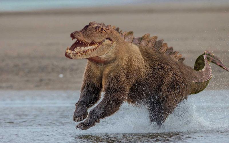 photoshopped animal hybrids (11)