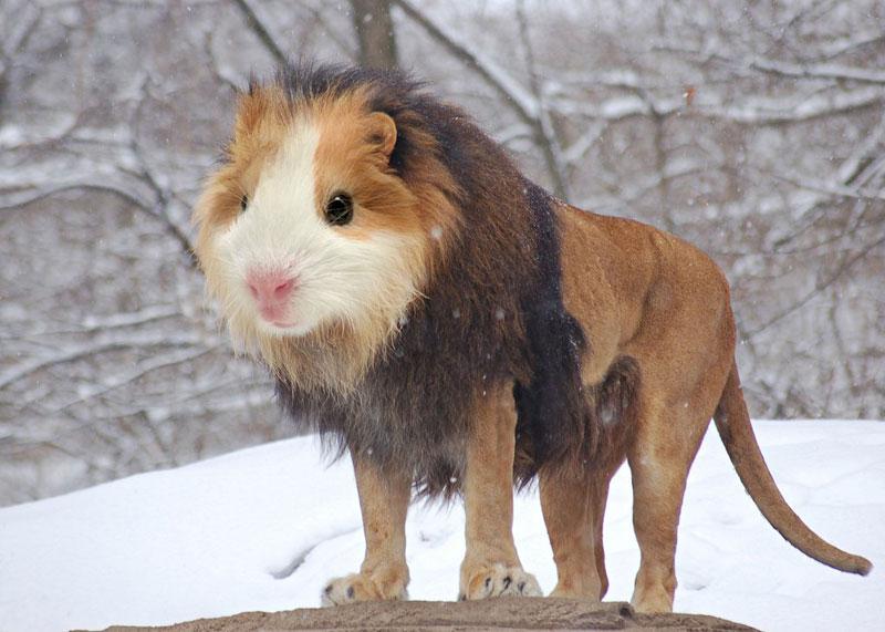 photoshopped animal hybrids (17)