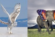 I'm Just Going to Leave these Photoshopped Animal Hybrids Here (17 Photos)