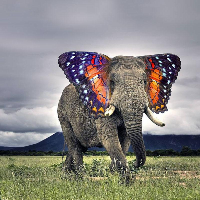 photoshopped animal hybrids (5)