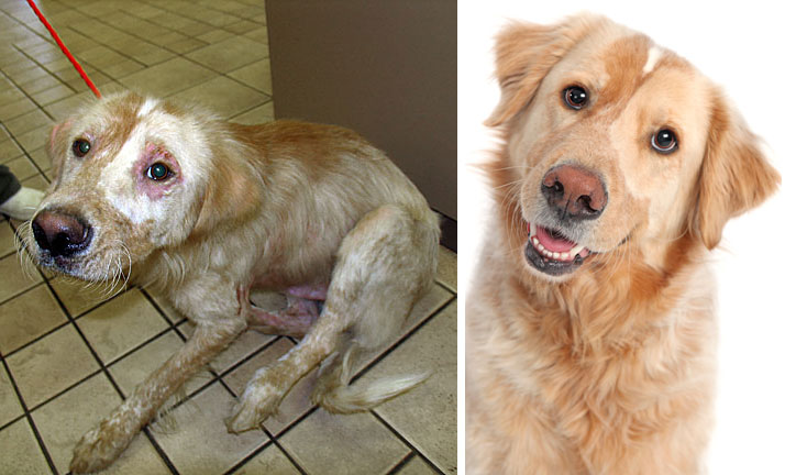 before and after photos of adopted dogs (3)