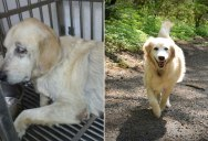 12 Heartwarming Before and After Photos of Adopted Dogs