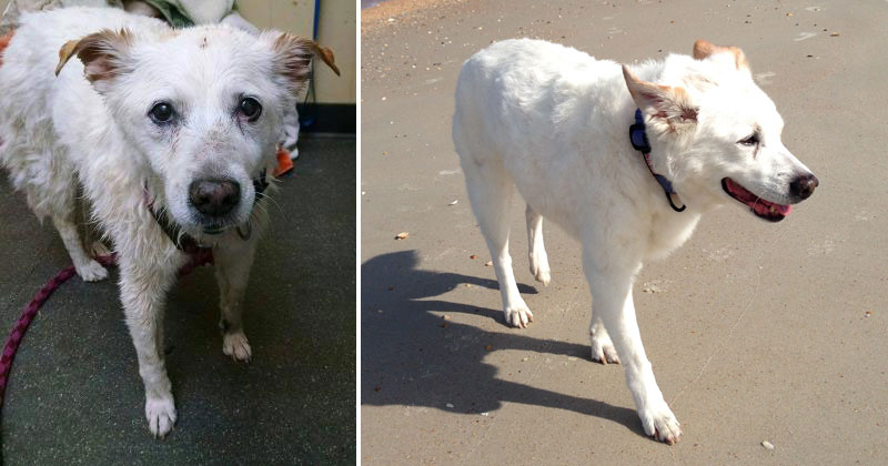 before and after photos of adopted dogs (6)