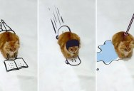 Doodle This Cat and Give Him New Adventures (23 Photos)