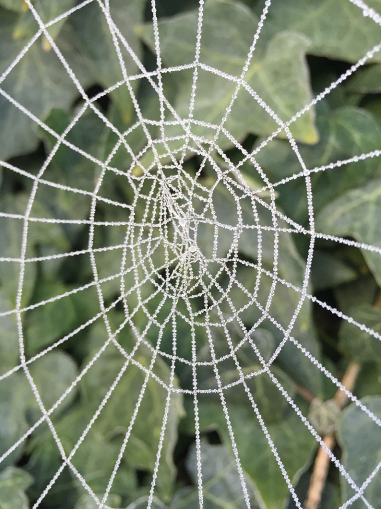 Picture of the Day: Frosted Spider Web
