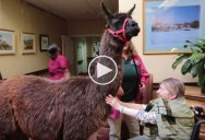 This Nursing Home Uses Unusual Animals to Engage Residents