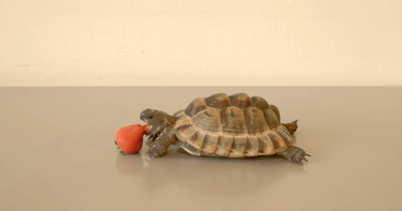Alan Rickman's Final Role Was the Voiceover of this Tortoise Eating a Strawberry