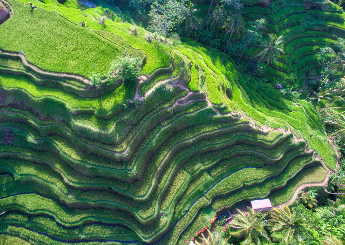 bali rice fields from above trey ratcliff Picture of the Day: Bali Rice Fields from Above