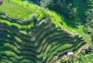 Picture of the Day: Bali Rice Fields from Above