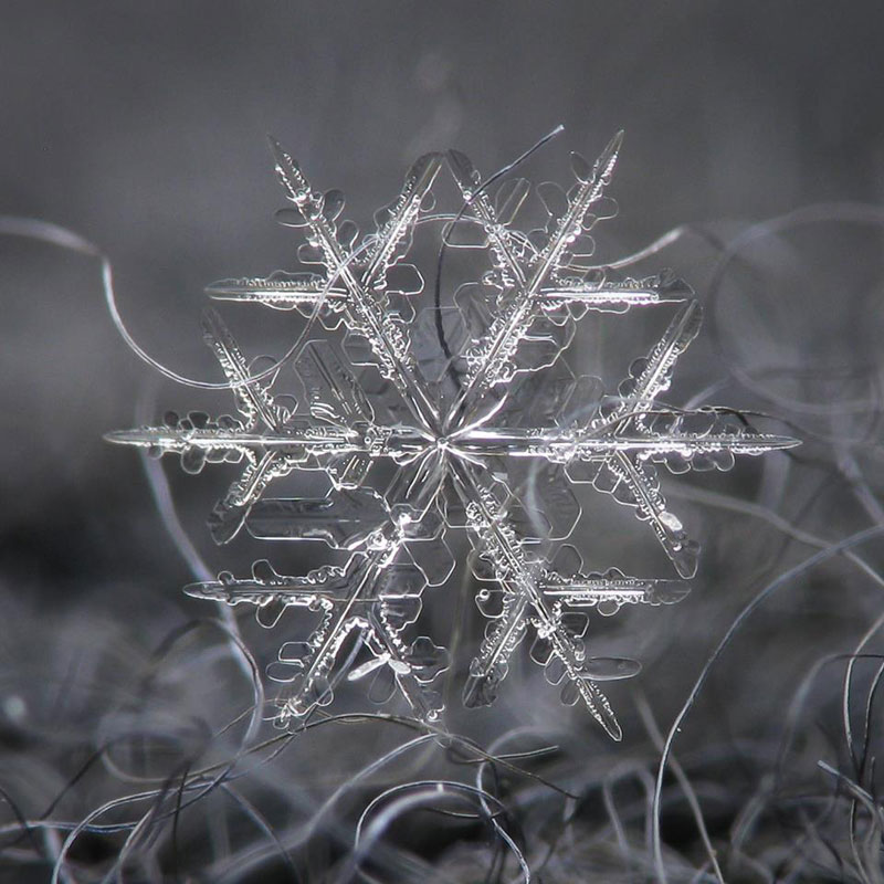 Close-Ups of Individual Snowflakes from this Winter by chaoticmind75 (3)