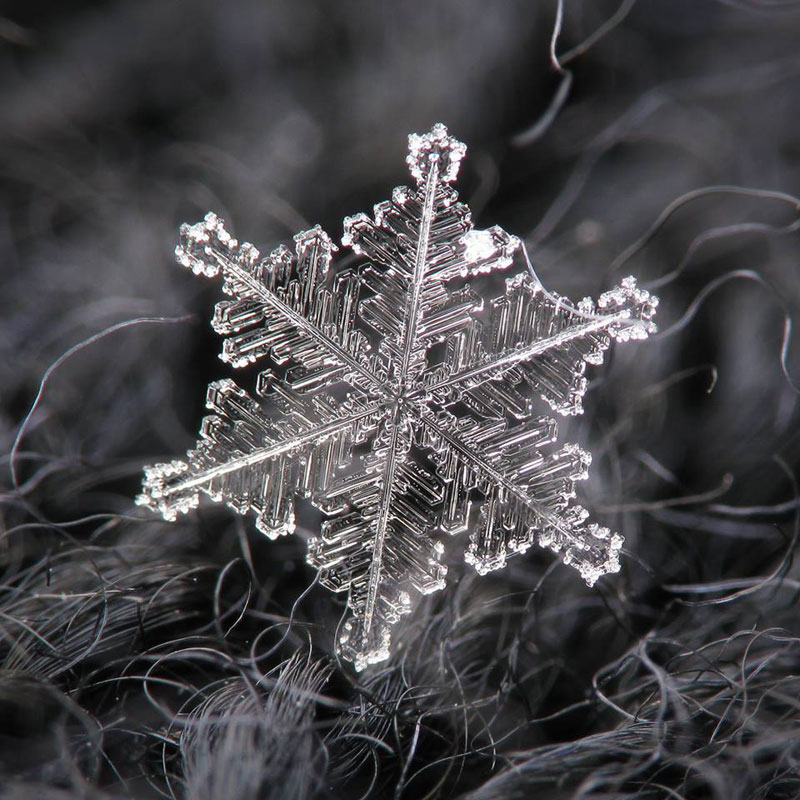 Close-Ups of Individual Snowflakes from this Winter by chaoticmind75 (4)