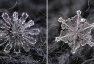 6 Amazing Close-Ups of Individual Snowflakes from this Winter