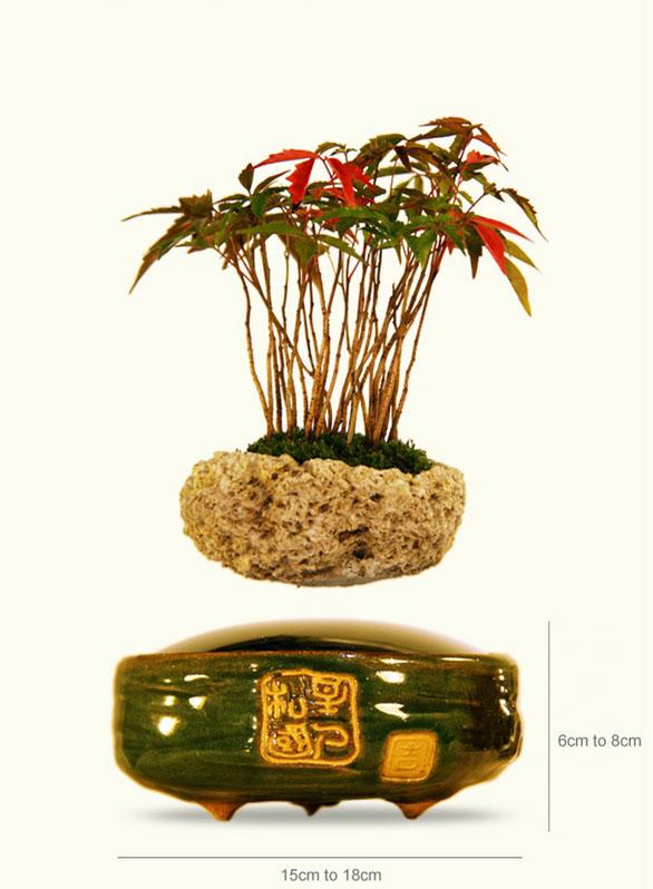 floating air bonsai by hoshinchu on kickstarter (1)