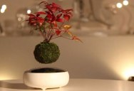 There's a Kickstarter for Floating Bonsai and it Looks Awesome