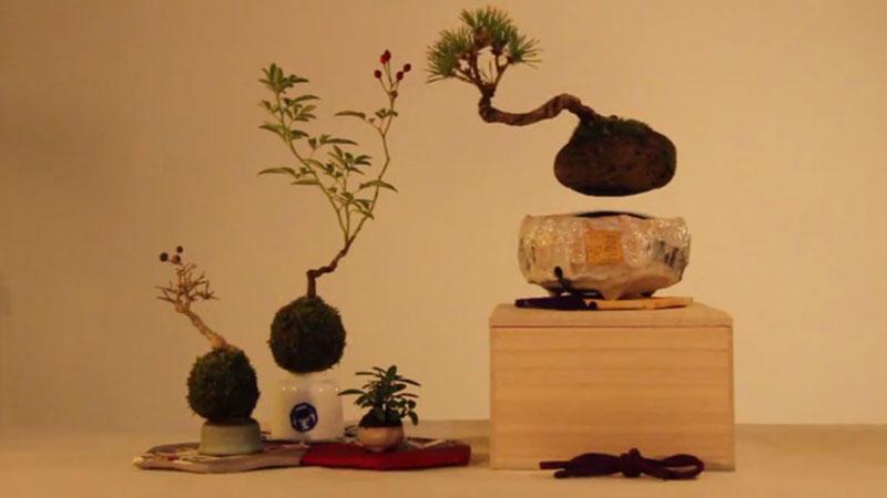 floating air bonsai by hoshinchu on kickstarter (9)