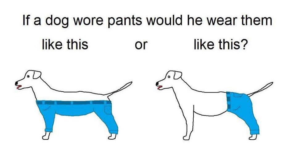 if a dog wore pants would he wear them like this or like this The Shirk Report – Volume 350