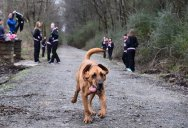Local Hound Dog Runs Half Marathon, Finishes in 7th Place