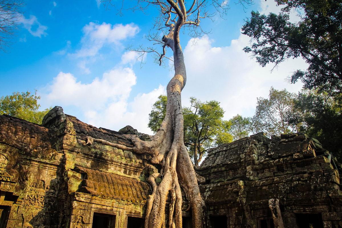 ta prohm temple angkor siem reap cambodia Picture of the Day: Ta Prohm Temple, Cambodia