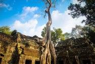 Picture of the Day: Ta Prohm Temple, Cambodia